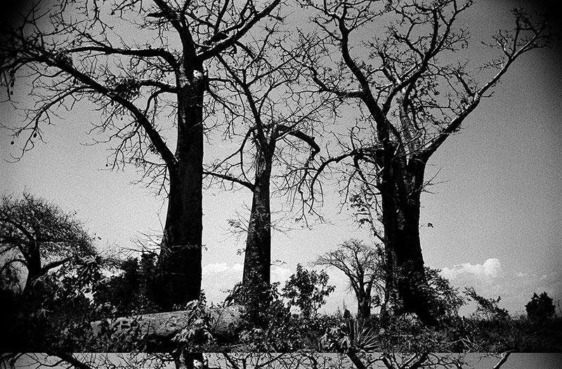 ALEXIS-DE-VILAR-TREE
