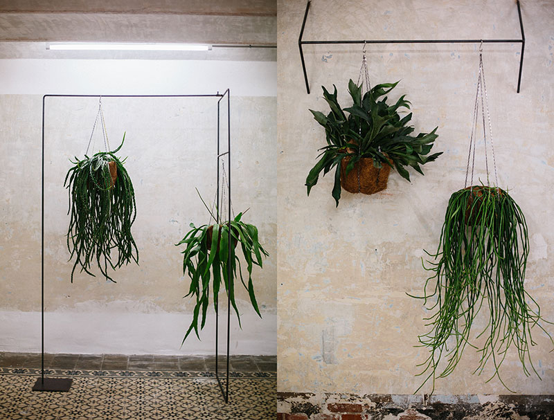 Eric-Vökel-Estudio-Sauvage-Barcelona-botanics