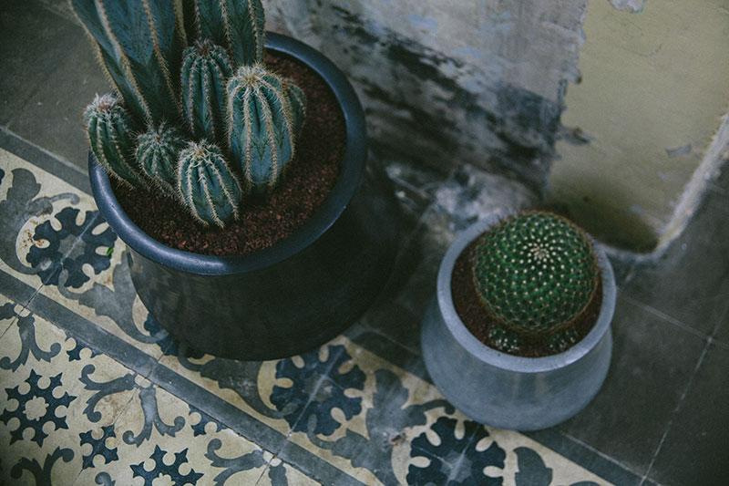 Eric-Vökel-Estudio-Sauvage-Barcelona-detalle-cactus