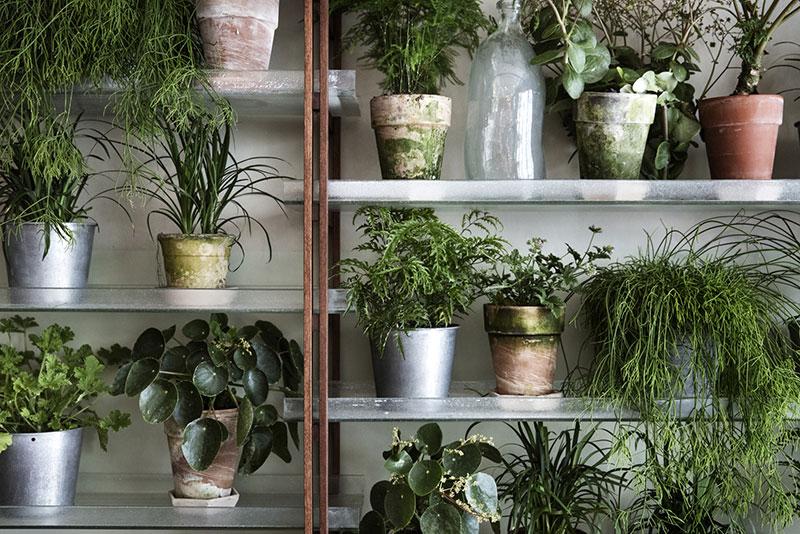 Väkst-restaurant-plants
